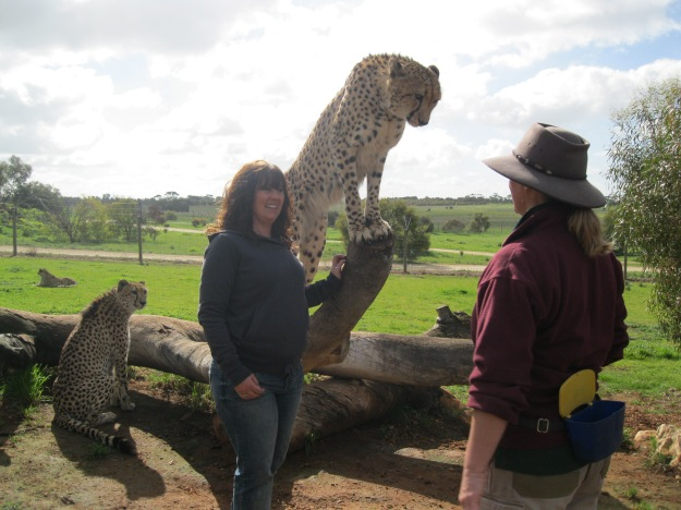 My Cheetah Experience